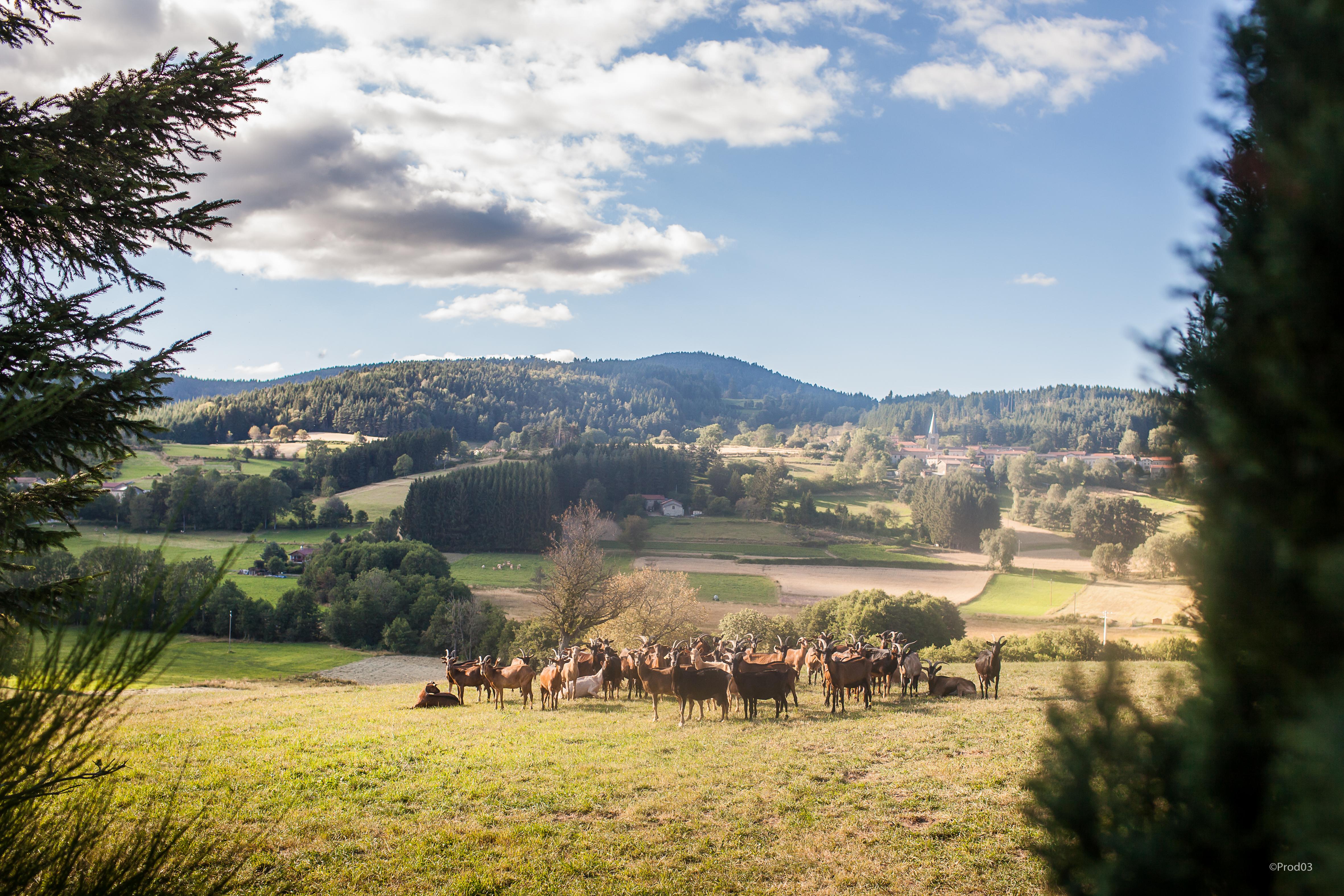 Atelier Plan Climat Air Energie // Thématique agriculture et forêt