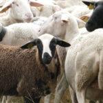 Les rendez-vous du patrimoine «Berge & pastoralisme sur les Hautes-Chaumes»