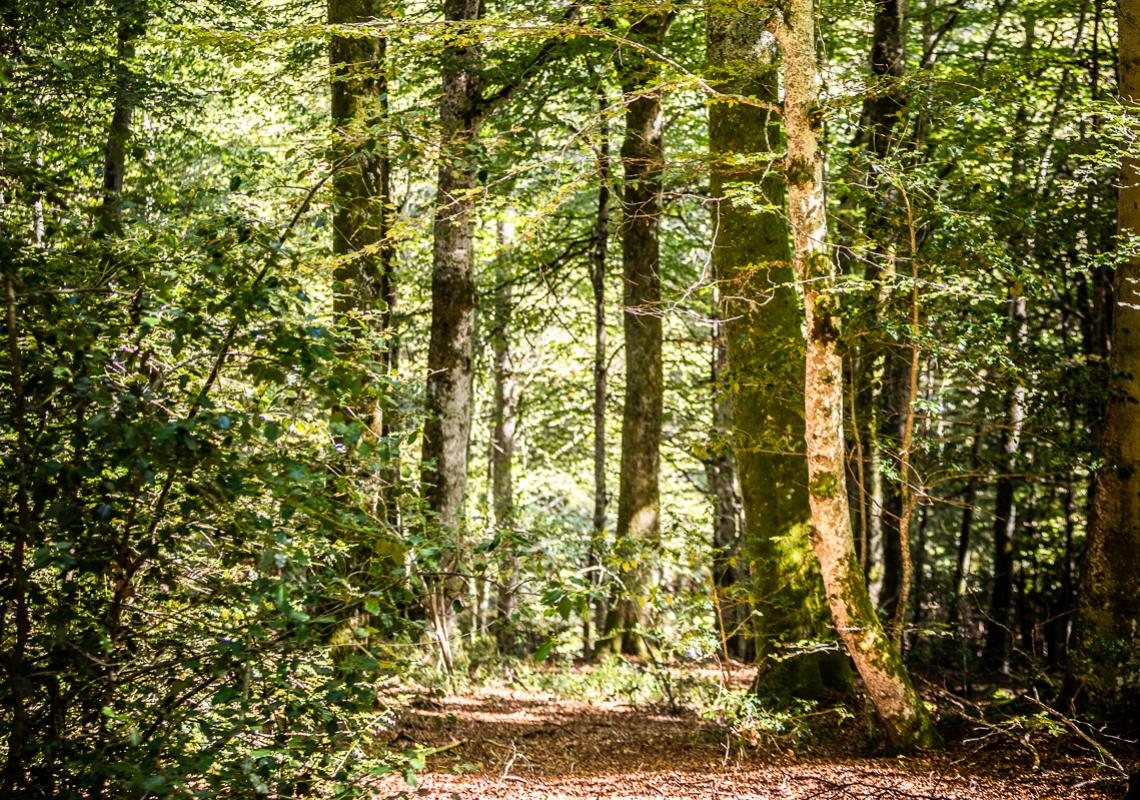Journées internationales des forêt