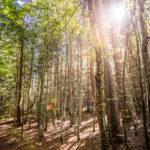 Du vieux bois dont on fait de belles forêts… Appel aux propriétaires et Sylviculteurs volontaires