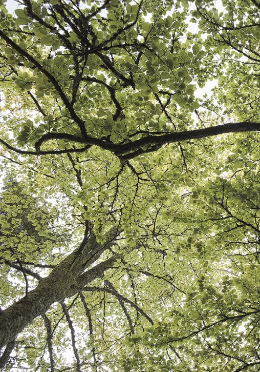 Les rendez-vous du patrimoine «Nous les arbres»